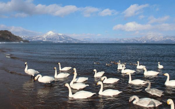 磐梯山と白鳥