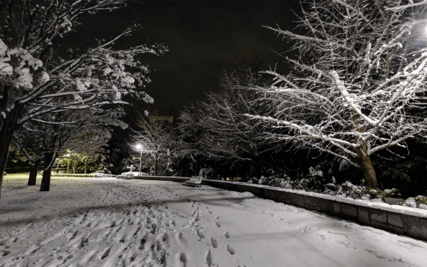 雪の木場公園