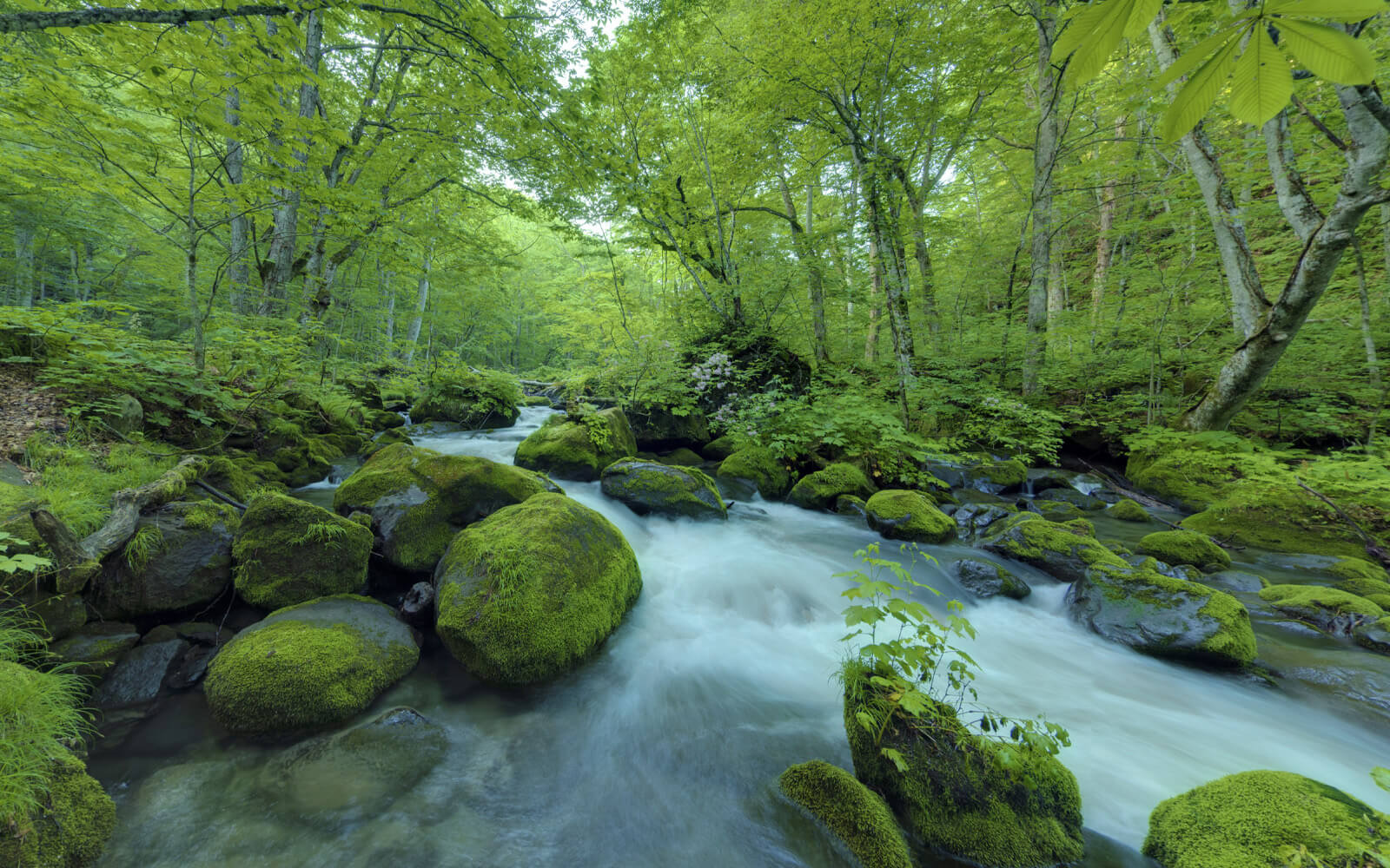 奥入瀬渓流 – 夏秋冬 –