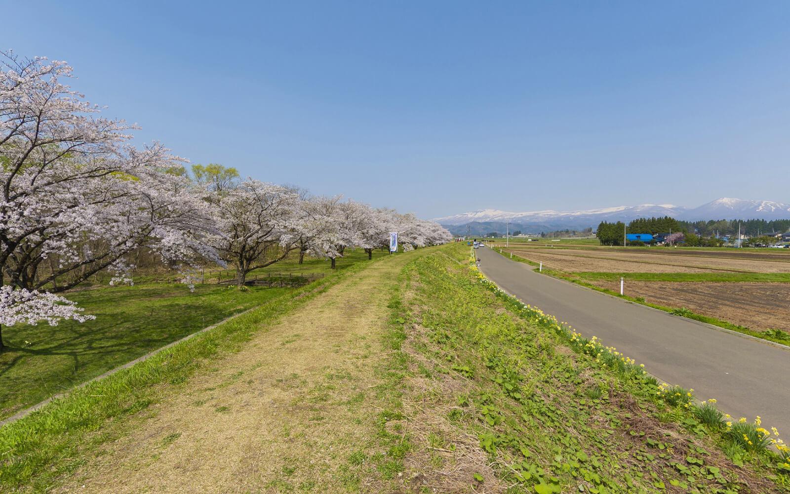雫石川園地の桜並木